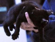 gothic-kittens
